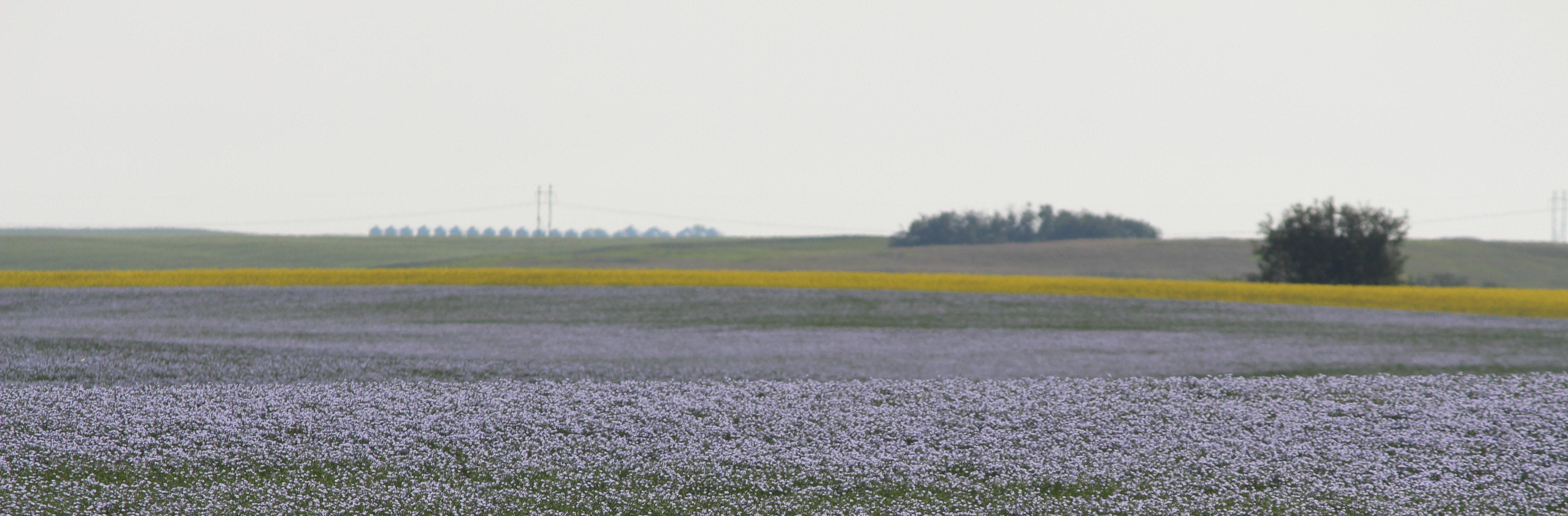 Flax Slider