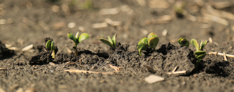 Seedling Photo